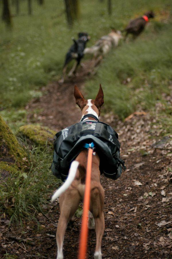 Sac à dos pour chien canisport