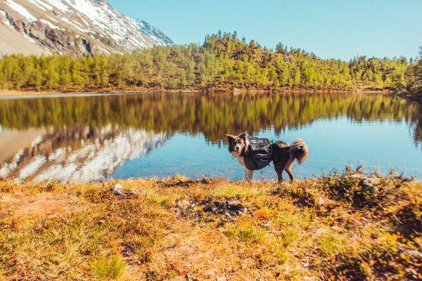 Sac à dos pour chien randonnée