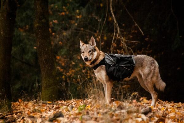 Sac à dos pour chien trekking