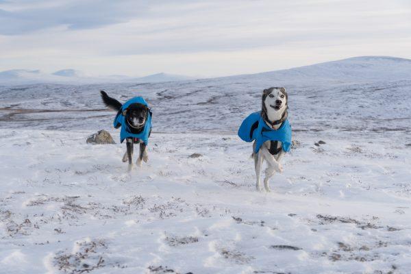 Manteau de course pour chien ultra léger temps froid