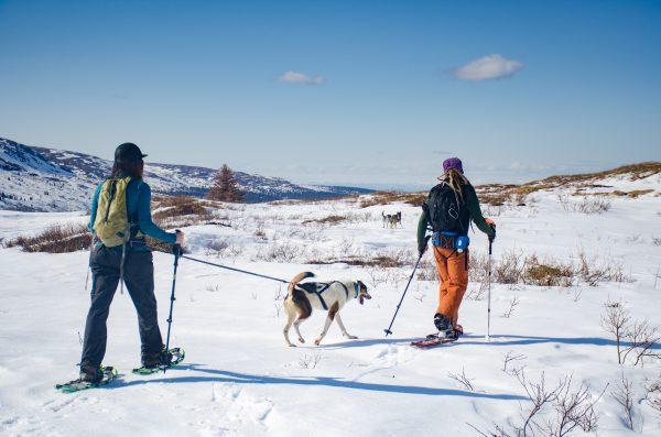 Ceinture pour randonnée chien trekking
