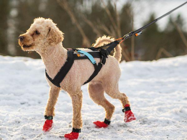 Harnais chien canisport