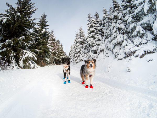 Chaussette longue distance froid pour chien