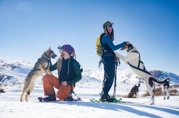 Harnais pour canisport chien de traineau