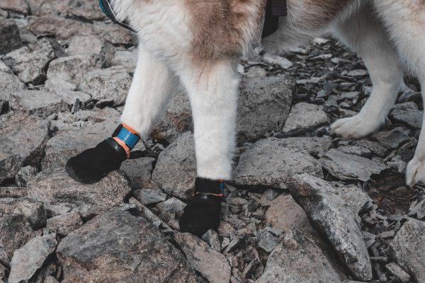 Chaussettes protectrice Non-stop DogWear sports canins