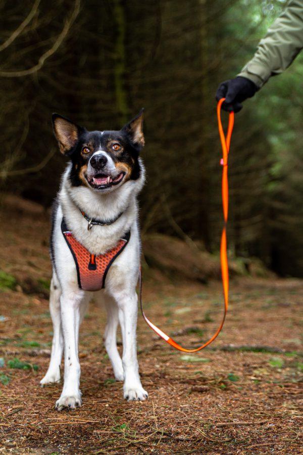 laisse solide et légère non-stop dogwear