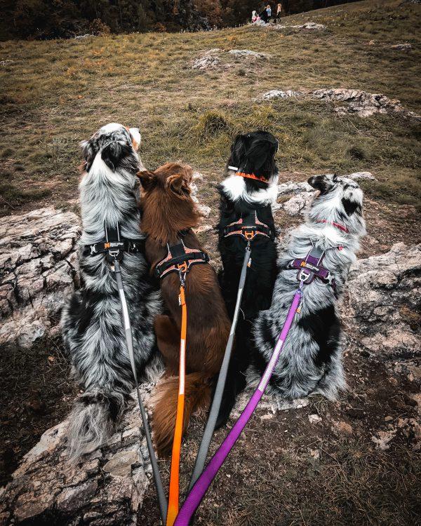 laisse solide et légère non-stop dogwear canisport
