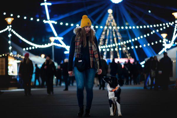 Safe collar dog sport