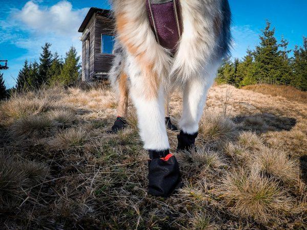 protection pattes chien haute qualité Non-stop Dogwear