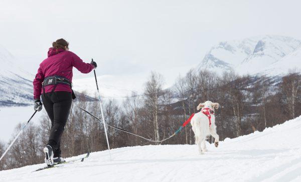 Ceinture chien trekking